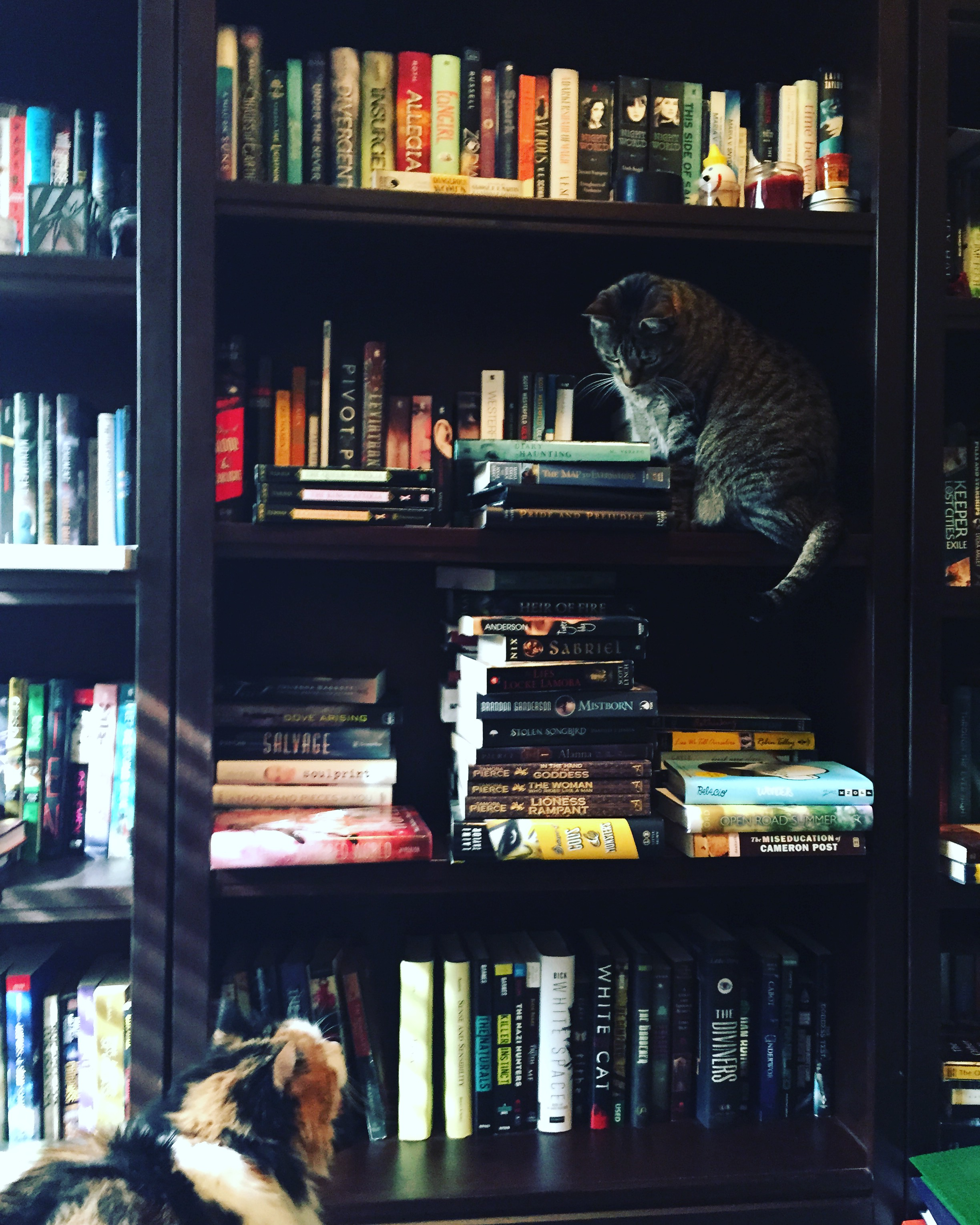 Cats on Bookshelves